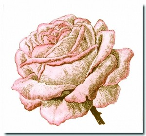 LaBlanche Stamp - Single Rose